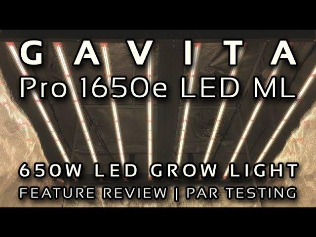 Gavita Pro 1650e Led Vs Spydr 2i/p | THCFarmer - Cannabis
